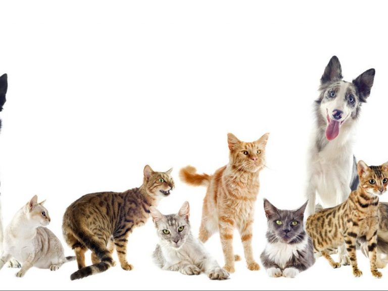 012527047 group pets e1516375983159